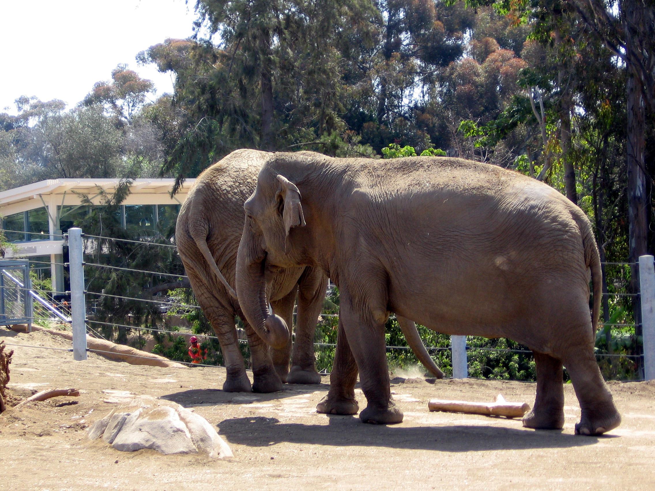 ElephantOdyssey3