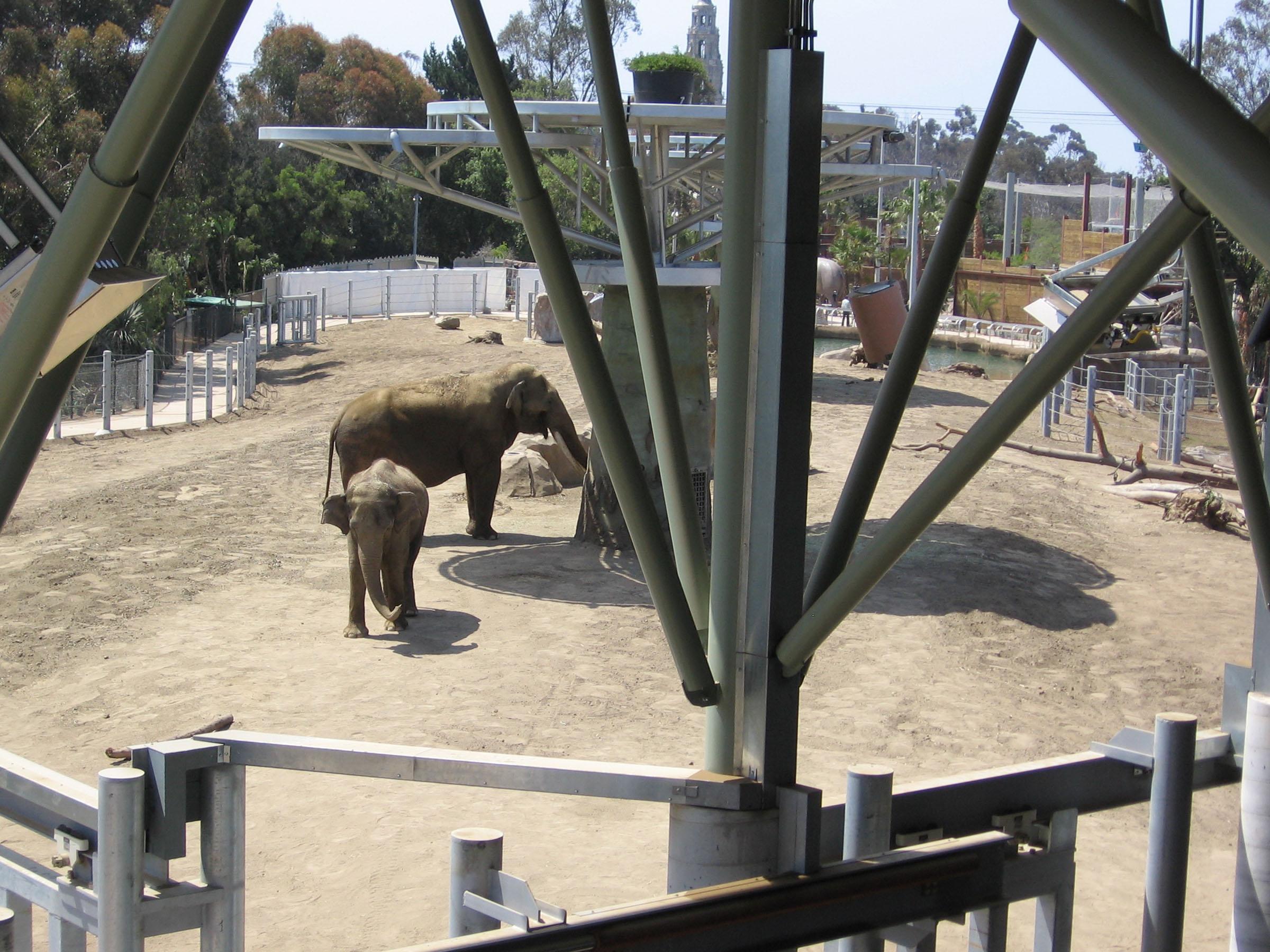 ElephantOdyssey5