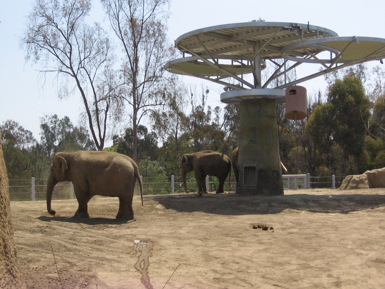 ElephantOdyssey6