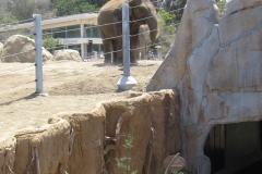 ElephantOdyssey10