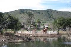 Santee-Lakes8